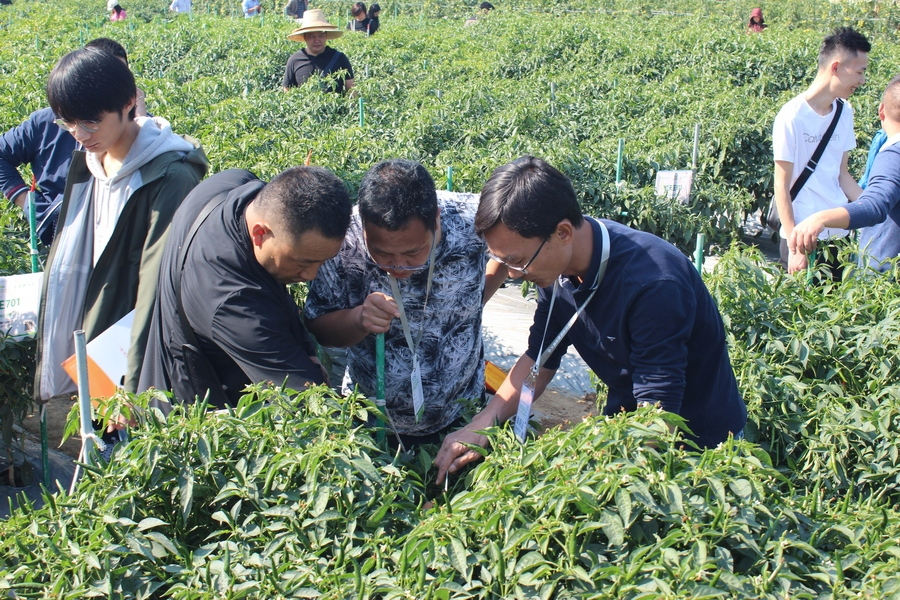 Guangdong_Seed_Expo_15