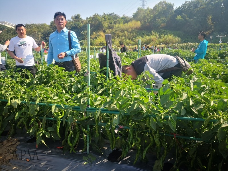 Guangdong_Seed_Expo_by_Xiaofeng_10