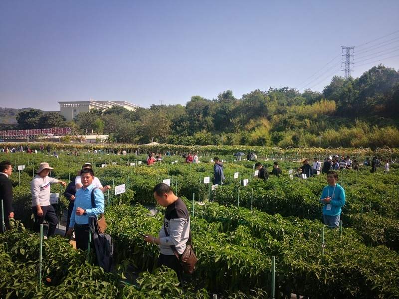 Guangdong_Seed_Expo_by_Xiaofeng_9